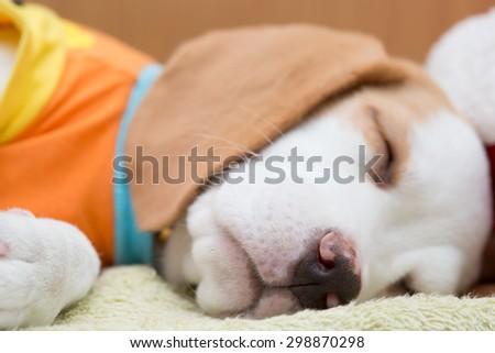 Sleeping baby dog - stock photo