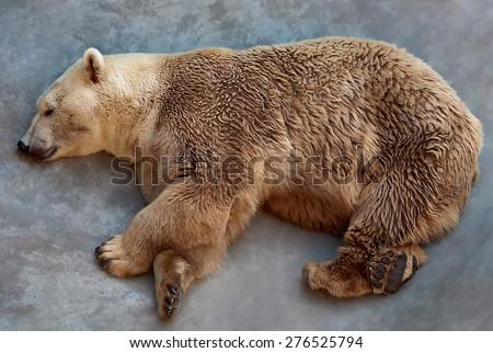 Sleeping Bear - stock photo