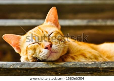 Sleeping cat at comfortably. - stock photo