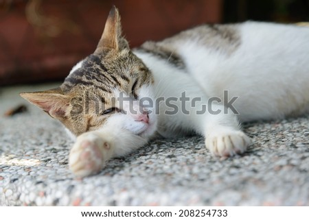 Sleeping cat close up
