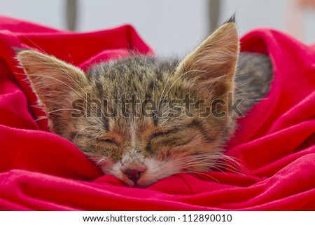 Sleeping cat in a red t shirt - stock photo