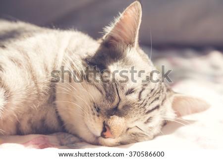 sleeping cat in the warm sunlight, vintage style - stock photo