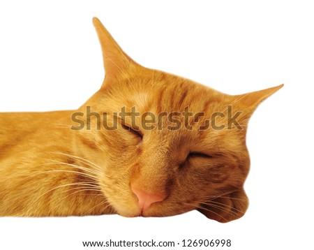 Sleeping cat isolated on white background. - stock photo