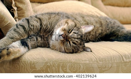 sleeping cat on the couch