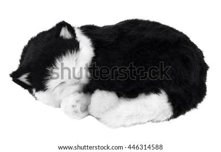 Sleeping cat on white - stock photo