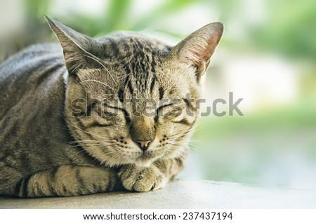 Sleeping cat's face, close-up  - stock photo