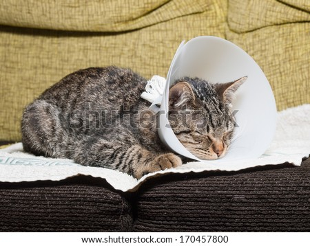 Picture Of Dog With Plastic Collar With Cat Sleeping Inside