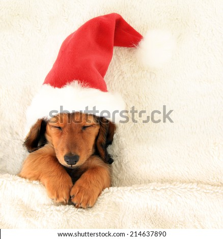 Sleeping Christmas puppy wearing a Santa hat.  - stock photo