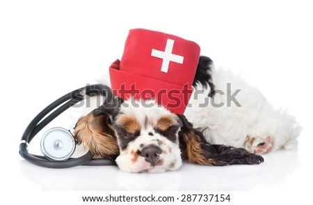 Sleeping Cocker Spaniel puppy wearing hat doctor with stethoscope on his neck. isolated on white background - stock photo