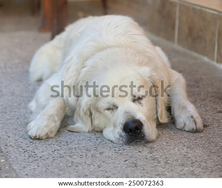 Sleeping Dog - Kas, Antalya Province, Turkey, Asia