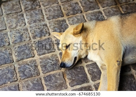 Sleeping dog on the floor