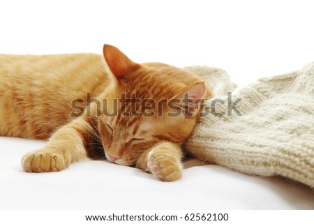 Sleeping ginger cat with sweater - stock photo