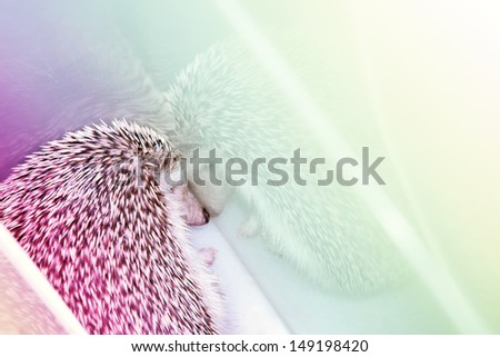 sleeping hedgehog - stock photo