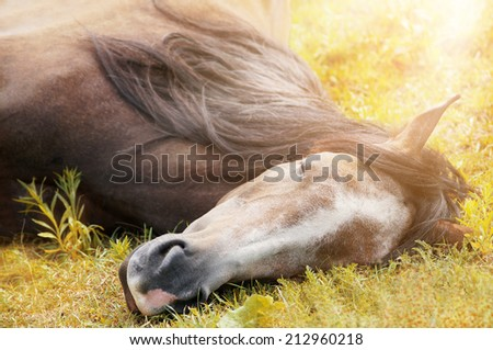sleeping horse on autumn grass in sunlight - stock photo