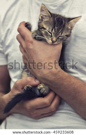 Sleeping kitten - stock photo