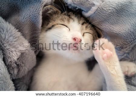 Sleeping kitten on blanket - stock photo