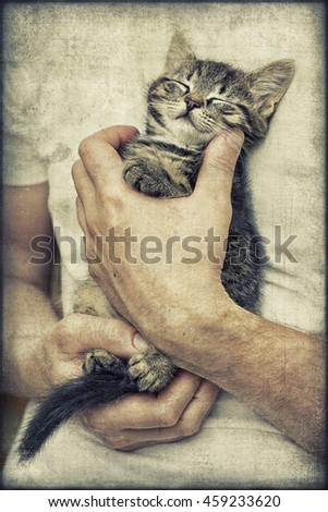 Sleeping kitten vintage - stock photo
