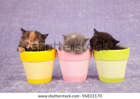 Sleeping kittens in colorful pots on lilac purple background - stock photo