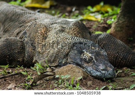 Sleeping Dragon Stock Images Royalty Free Images