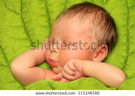 Sleeping Newborn Baby Boy in a Green Leaf - stock photo