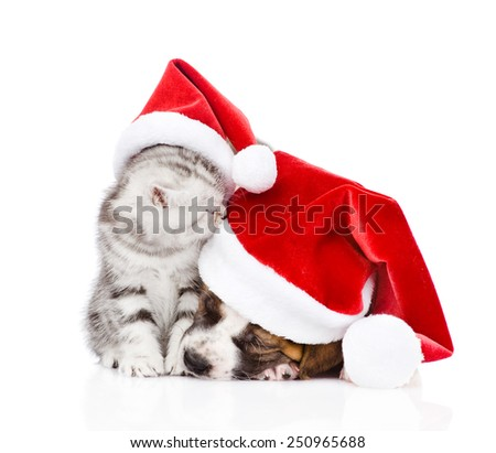 sleeping puppy and scottish kitten in red santa hats. isolated on white background