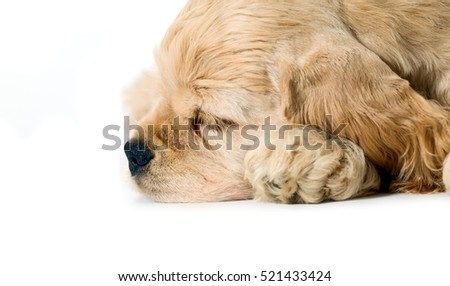 Sleeping puppy dog