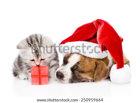 Sleeping puppy in red santa hat and scottish kitten with gift box. isolated on white background - stock photo