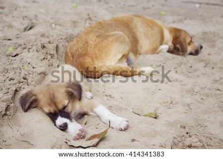 Sleeping puppy on the sandy street
