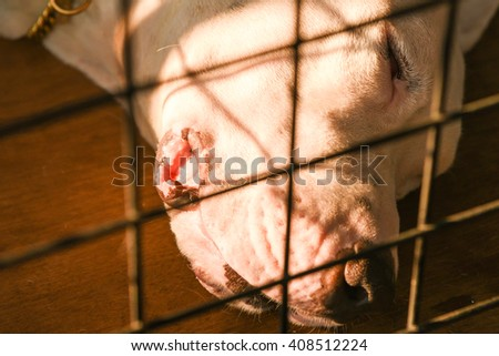 Sleeping sad dog in cage,Animal cruelty, in pet shop Kerala, India. stray dog behind corral of a dog refuge, cruel, animal shelter, lonely dog waiting for a home, behind bars, hot summer           - stock photo