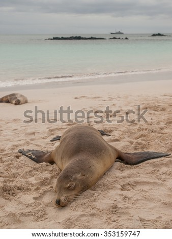 Sleeping sea lion on beach with fins sprawled out, ocean and cloudy sky and yacht in the background.