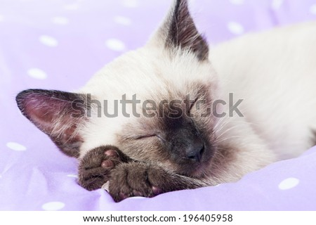 Sleeping siamese kitten on a bed