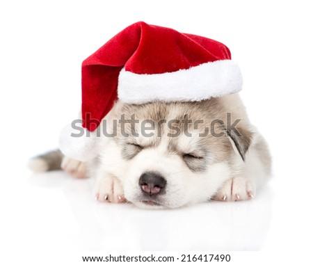 sleeping Siberian Husky puppy with santa hat. isolated on white background - stock photo