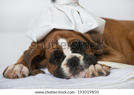 Sleeping sick puppy isolated on white