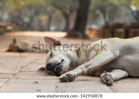 sleeping stray dogs in the shadows of Wat Phra Si Sanphet in historical park in Ayutthaya (ancient capital of Thailand) - stock photo