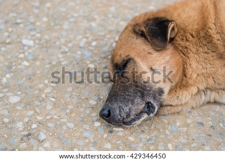 Sleeping thai dog on street.