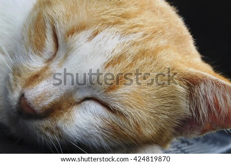 Sleeping white yellow mottle cat with black background. Extreme close up angle.