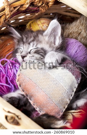sleeps kitten and heart pillow - stock photo