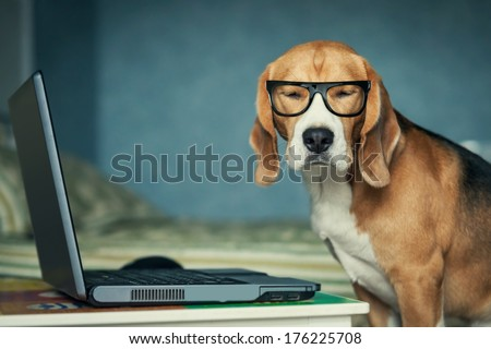 Sleepy beagle dog in funny glasses near laptop - stock photo