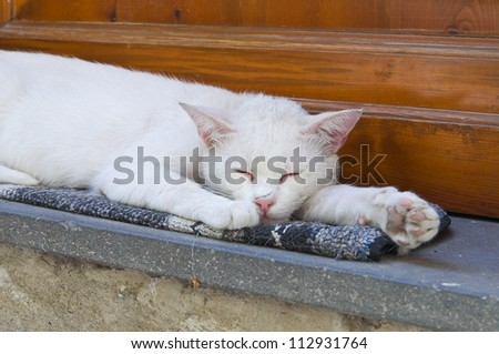 Sleepy cat. - stock photo