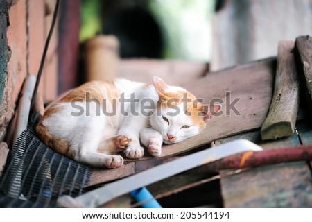 Sleepy cat  - stock photo