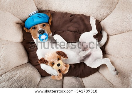 sleepy dog in pet  bed with teddy bear and pacifier resting or sleeping  - stock photo