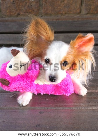 Sleepy Dog with a new stuffed animal soft toy, selective focus, Continental Toy Spaniel Papillon Dog Breed, Pure Breed - stock photo