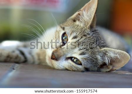 Sleepy kitten - stock photo