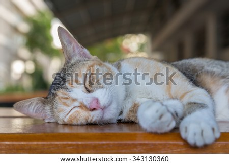 sleepy kitten cat lying on the table with green bokeh background