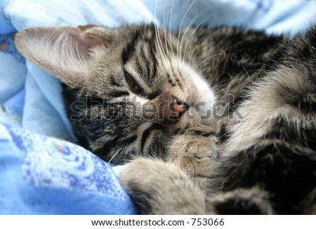 Sleepy kitten on soft bed