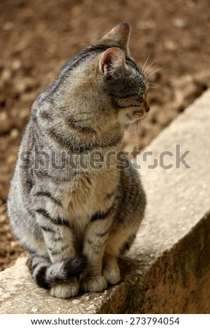 Sleepy tabby cat sitting on the wall in the garden, in profile. Natural light, vertical format, selective focus. - stock photo