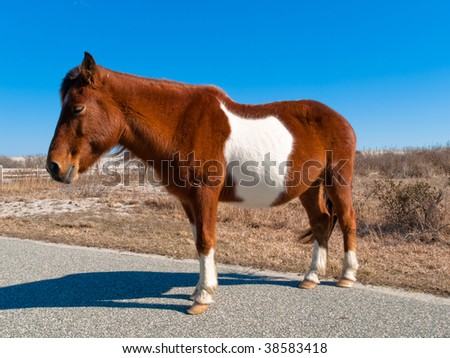 Sleepy Wild Horse - stock photo