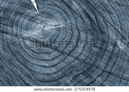 slice of wood timber natural background, x-ray effect - stock photo