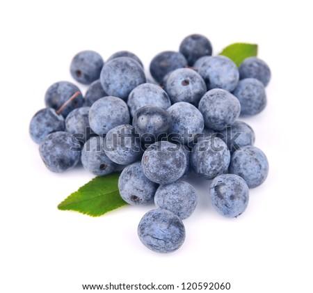 Sloe berry on white close up - stock photo
