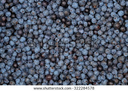 Sloes - Freshly Picked - stock photo